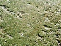 Naturlig yttersida av grön gyttja Royaltyfri Foto