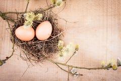 naturliga ägg Arkivfoton