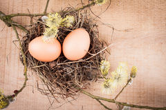 naturliga ägg Arkivfoto