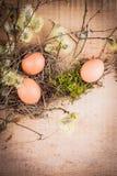 naturliga ägg Arkivbilder