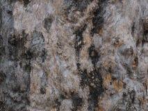 Naturliga abstrakt begreppmodeller på skället av en gammal trädstam Fotografering för Bildbyråer