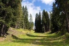 Naturliga Adamello parkerar Arkivbilder