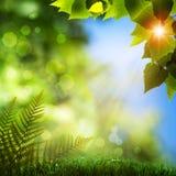Naturliga bakgrunder för sommar arkivfoto