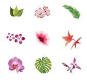 Naturliga beståndsdelar Royaltyfria Bilder
