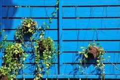 Naturliga blomkrukor som hänger med blåttbrädet. Arkivbild