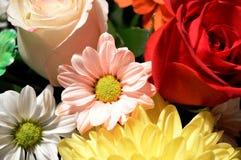 Naturliga blommor - ärliga känslor Förälskelse - som blommor - är alltid härlig Arkivbild