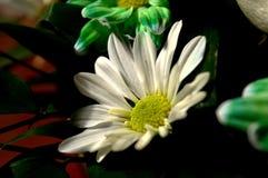 Naturliga blommor - ärliga känslor Förälskelse - som blommor - är alltid härlig Arkivbilder