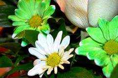 Naturliga blommor - ärliga känslor Förälskelse - som blommor - är alltid härlig Fotografering för Bildbyråer