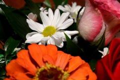 Naturliga blommor - ärliga känslor Förälskelse - som blommor - är alltid härlig Royaltyfri Foto