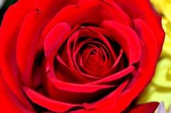 Naturliga blommor - ärliga känslor Förälskelse - som blommor - är alltid härlig Royaltyfri Bild