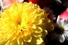 Naturliga blommor - ärliga känslor Förälskelse - som blommor - är alltid härlig Arkivfoto