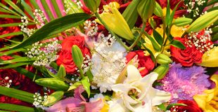Naturliga blommor Royaltyfri Bild