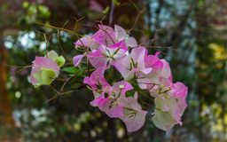 Naturliga blommor Royaltyfria Foton