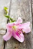 Naturliga blommor Fotografering för Bildbyråer