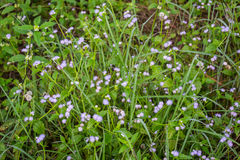 Naturliga blommor Royaltyfria Bilder