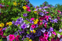 Naturliga blommor Royaltyfri Fotografi
