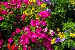 Naturliga blommor Arkivfoton