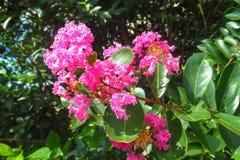 Naturliga blommor Arkivbild