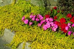 Naturliga blommor Arkivbilder
