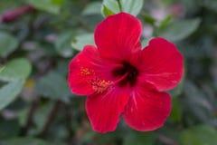 Naturliga blommor Arkivfoto