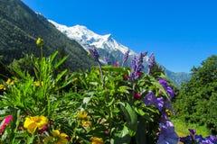 Naturliga blommor nära berget Royaltyfri Fotografi