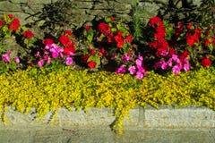 Naturliga blommor nära husfönstret Arkivfoto