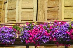 Naturliga blommor nära trähusfönstret Arkivfoto