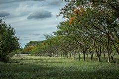 Naturliga blommor och träd Arkivfoton