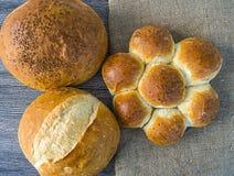 Naturliga brödbageribilder, kalkonbrödtyper, formade bröd, släntrar brödvariationer, olika typer av bröd på trägolv Royaltyfri Bild