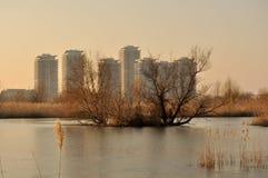 Naturliga Bucharest parkerar royaltyfri foto