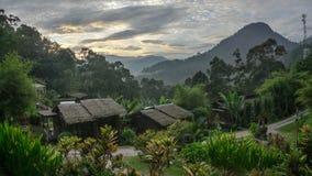 Naturliga Forest Resort Arkivfoton