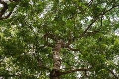 Naturliga gröna skogträdfilialer royaltyfria bilder