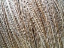 Naturliga Grey Brown Hair Macro Fotografering för Bildbyråer