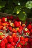 naturliga jordgubbar Arkivfoto