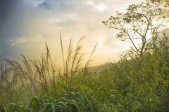 Naturliga landskap Arkivfoto