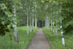 Naturliga landskap i ett historiskt ställe Pushkinskiye som är blodig av Pskov, Ryssland Arkivfoto
