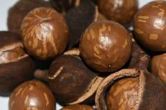 Naturliga muttrar för Macadamiaträd i Shell And Husk royaltyfri fotografi