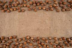 Naturliga obrutna hasselnötter på en jute hänger löst bakgrund arkivfoton