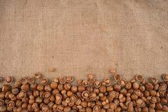 Naturliga obrutna hasselnötter på en jute hänger löst bakgrund arkivbild