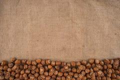 Naturliga obrutna hasselnötter på en jute hänger löst bakgrund Fotografering för Bildbyråer