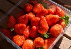 naturliga och nya röda jordgubbar på en tabell som är klar att äta fotografering för bildbyråer