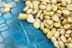 Naturliga organiska gröna kaffebönor fotografering för bildbyråer
