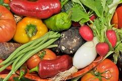 Naturliga organiska grönsaker Arkivfoto