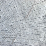 Naturliga red ut spruckna Grey Tree Stump Cut Texture, stor detaljerad bakgrund texturerad modellCloseup royaltyfri fotografi