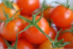 Naturliga saftiga tomater som all är nya och Fotografering för Bildbyråer