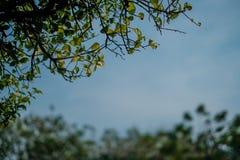 Naturliga sidor på filial av trädet med suddig bakgrund arkivfoto