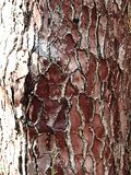 naturliga texturer arkivbild