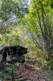 naturliga trees för bakgrundsbambuclose upp Arkivbilder