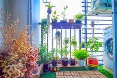 Naturliga växter i de hängande krukorna på balkongen arbeta i trädgården Arkivfoto