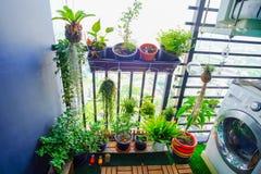 Naturliga växter i de hängande krukorna på balkongen arbeta i trädgården Royaltyfri Fotografi